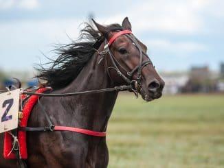 cheval plus cher du monde