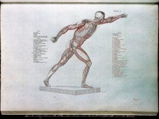 nombre muscles