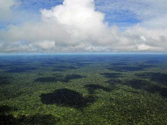 amazonie taille