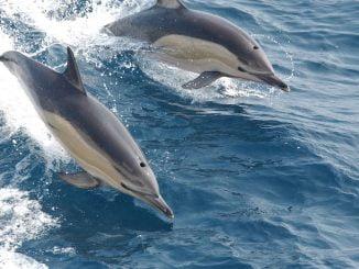 dauphins espérance de vie