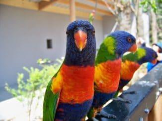 oiseaux nombre d'espèces