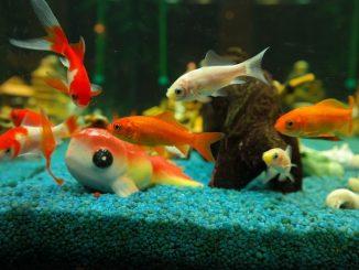 aquarium poissons nombre